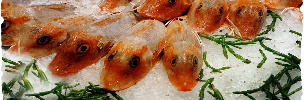 fiskar-redTAGG